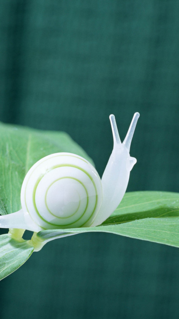 Falling Snow Wallpaper Iphone 5 White Snail On The Green Leaf Wallpaper Free Iphone