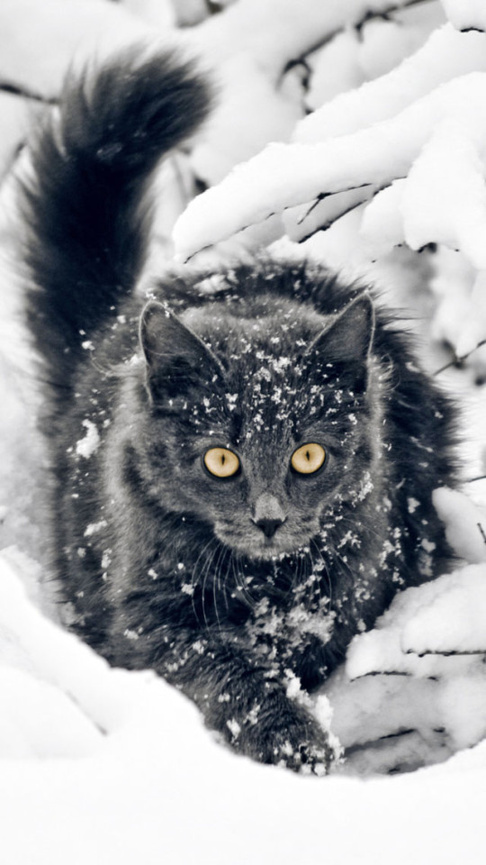 Cute Vintage Floral Wallpaper Black Cat In Snow Wallpaper Free Iphone Wallpapers