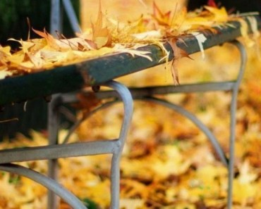 Maple Leaves On The Wooden Bench