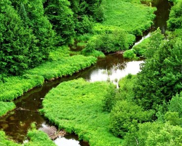 Meandering River In The Forest