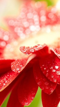 Bright Red Flower with Water Drops