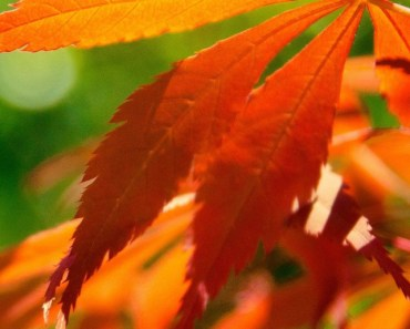 Red Leaves Under The Sunshine