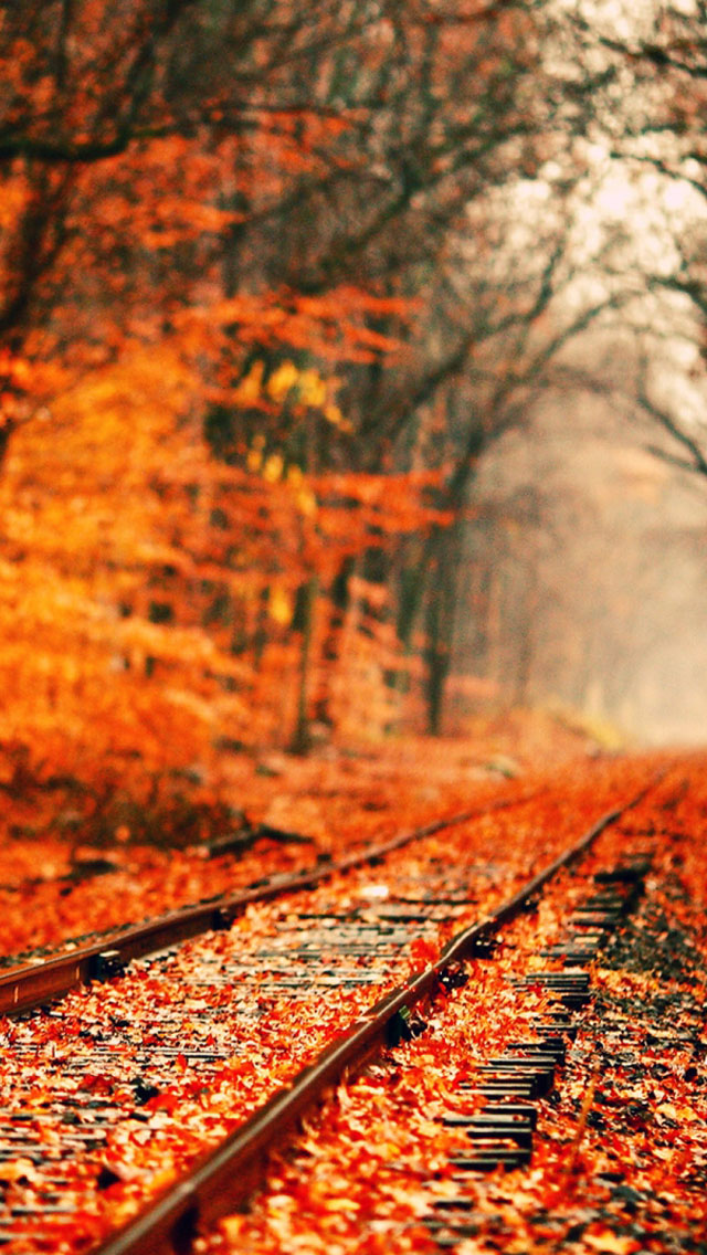 Iphone 6 Wallpaper Fall Leaves Abandoned Railroad Tracks In Autumn Iphone 6 6 Plus And