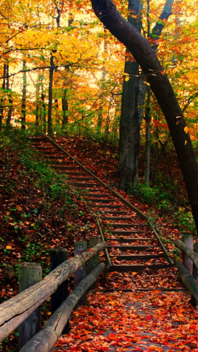 Iphone Wallpaper Fall Leaves Autumn Path Iphone 6 6 Plus And Iphone 5 4 Wallpapers