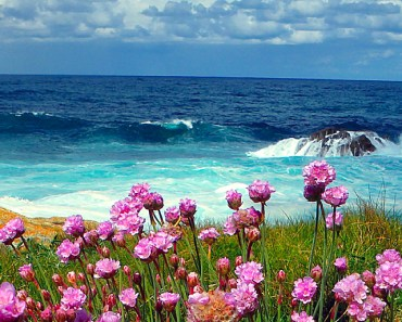 Violet Flowers At The Seaside