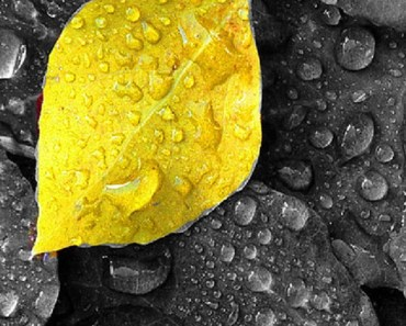 Yellow Leaf with Raindrops