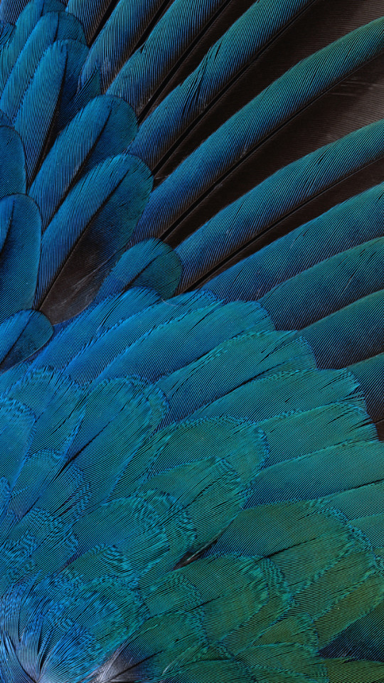 Chanel Iphone 6 Wallpaper Blue Feathers Wallpaper Free Iphone Wallpapers