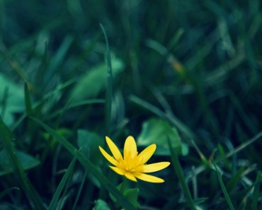 Small Yellow Flower In The Grass
