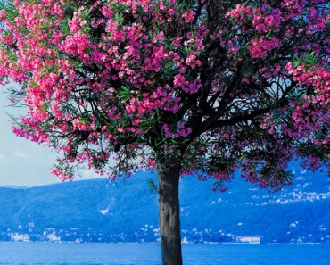 Spring Red Tree Beach