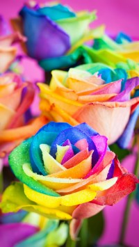 Colorful Roses Wallpaper - Free iPhone Wallpapers