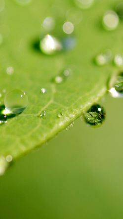 Raindrops On The Green Leaf