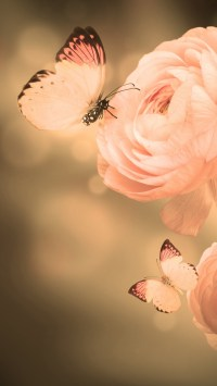 Rose & Butterfly