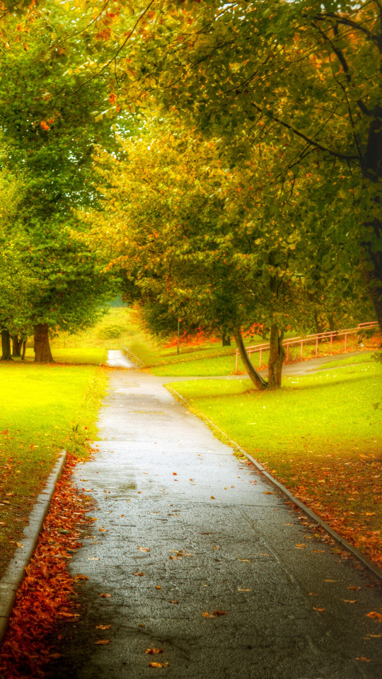 Rain Fall Hd Wallpapers Autumn Path After The Rain Iphone 6 6 Plus And Iphone 5