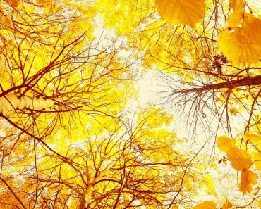 Autumn Yellow Woods