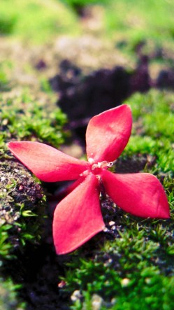 Red Flower On The Grass