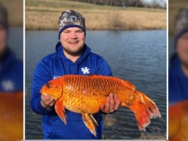 Fisherman Reels In Ginormous Goldfish From Pond