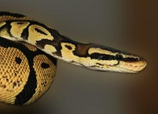 Stoner Snake Owner Has To Apologize For Strange Pet