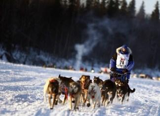 Random Local Dog Joins Iditarod For 30 Miles