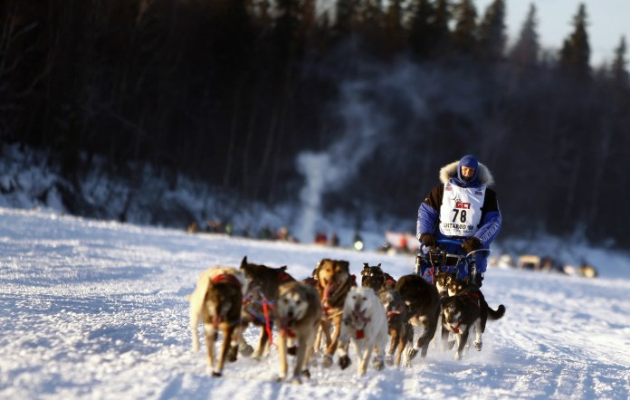 Random Local Dog Joins Iditarod For 30 Miles