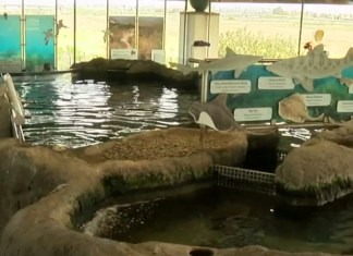 High School Student Jumps Into Shark Tank At Local Chula Vista Aquarium