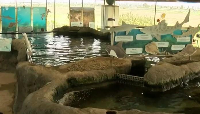 High School Student Jumps Into Shark Tank At Local Chula Vista Aquarium