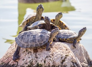 Florida Man Threatens To Destroy Everyone With Army Of Turtles