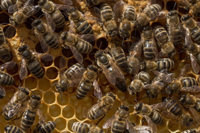 Wind Gust Causes Beehive To Land On Woman's Head