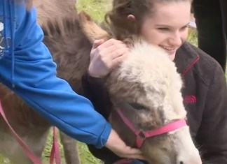 University Brings In Therapy Donkeys To Help Students De-Stress For Finals