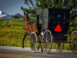 Horse And Buggy Driver Gets A DUI