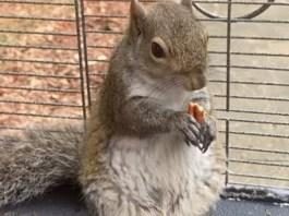 "Alabama Man Feeds Meth To ""Attack Squirrel"""