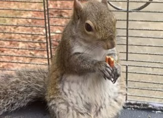 "Alabama Man Feeds Meth To ""Attack Squirrel"""