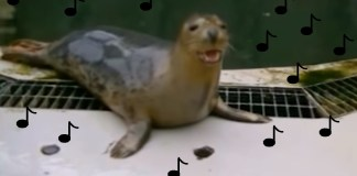 Scientists Have Teach Seals To Sing 'Star Wars' Theme