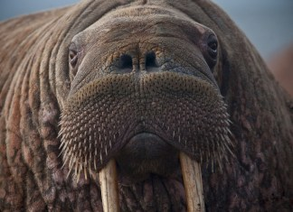 Police Show Up To Man's House After 'Steal A Walrus' Tweet