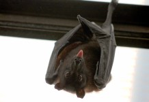 Spirit Airlines Passengers Encounter Bat On Flight To New Jersey