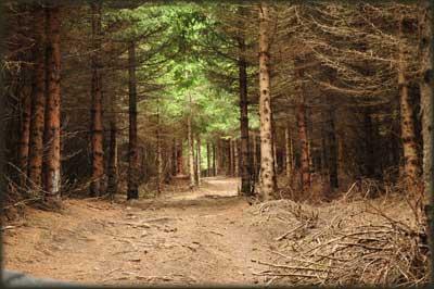 Iza šumarka počinje strmina
