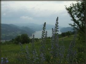 Dunav u proleće
