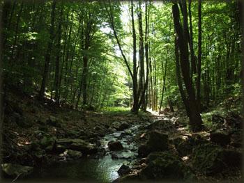 Jedan od brojnih šumskih potočića u polumraku letnjeg dana