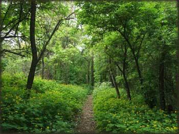 U gustim šumama Fruškogorskim