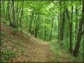 Jedan od mnogobrojnih Fruškogorskih single trail-ova