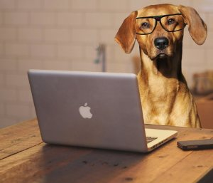 FreeConference Dog with Computer
