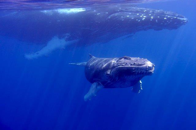 Il segreto dellapnea nei mammiferi marini  Corsi Apnea Roma