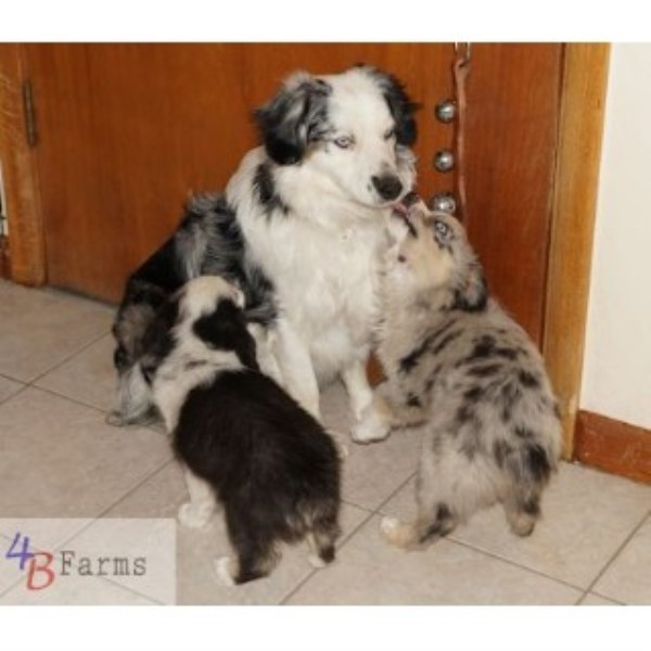 puppy farms in utah