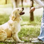 best reviews of the online dog trainer