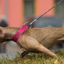 doggy dans online dog trainer review - How to Stop Pulling on Leash