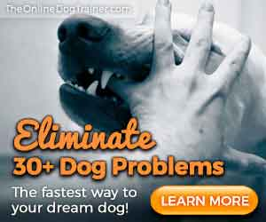 doggy-dans-online-dog-trainer-review-online-dog-trainer-course