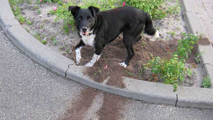 How-can-I-get-my-dogs-to-stop-digging