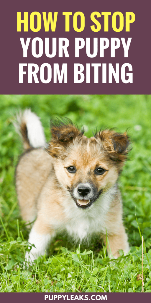 3 Simple Ways To Stop Your Puppy From Biting - Puppy Leaks
