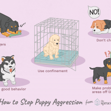 How to Stop Conflict Aggression in Puppies