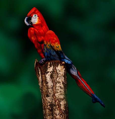 14-09-portrait-parrot
