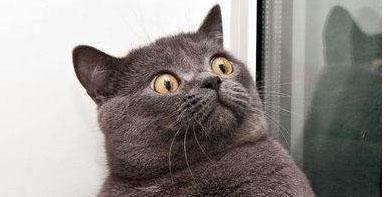 14-10-black-cat-halloween
